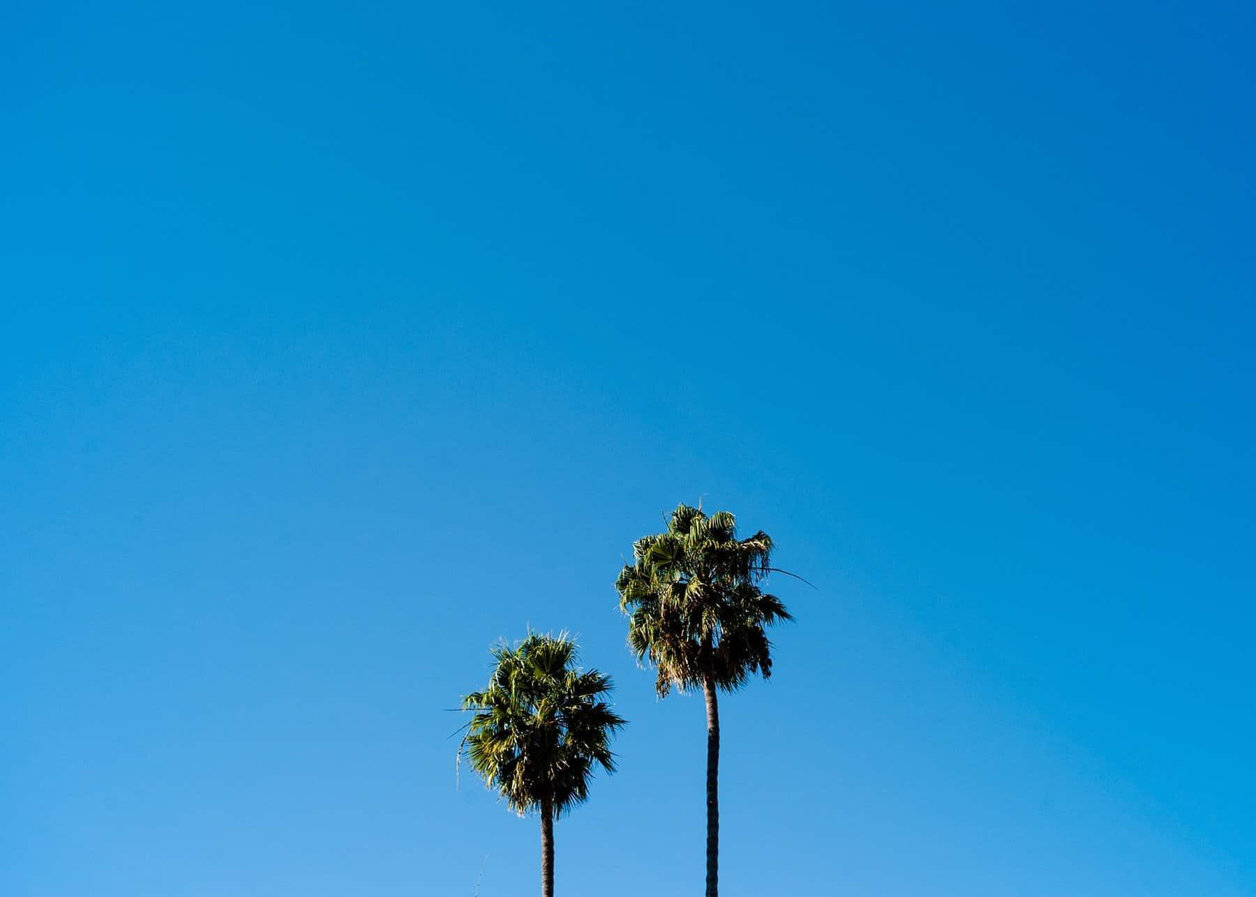 binary-palm-trees-e1539585336233