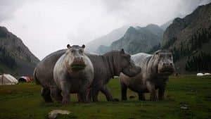 200615 – Hippos – Linkedin
