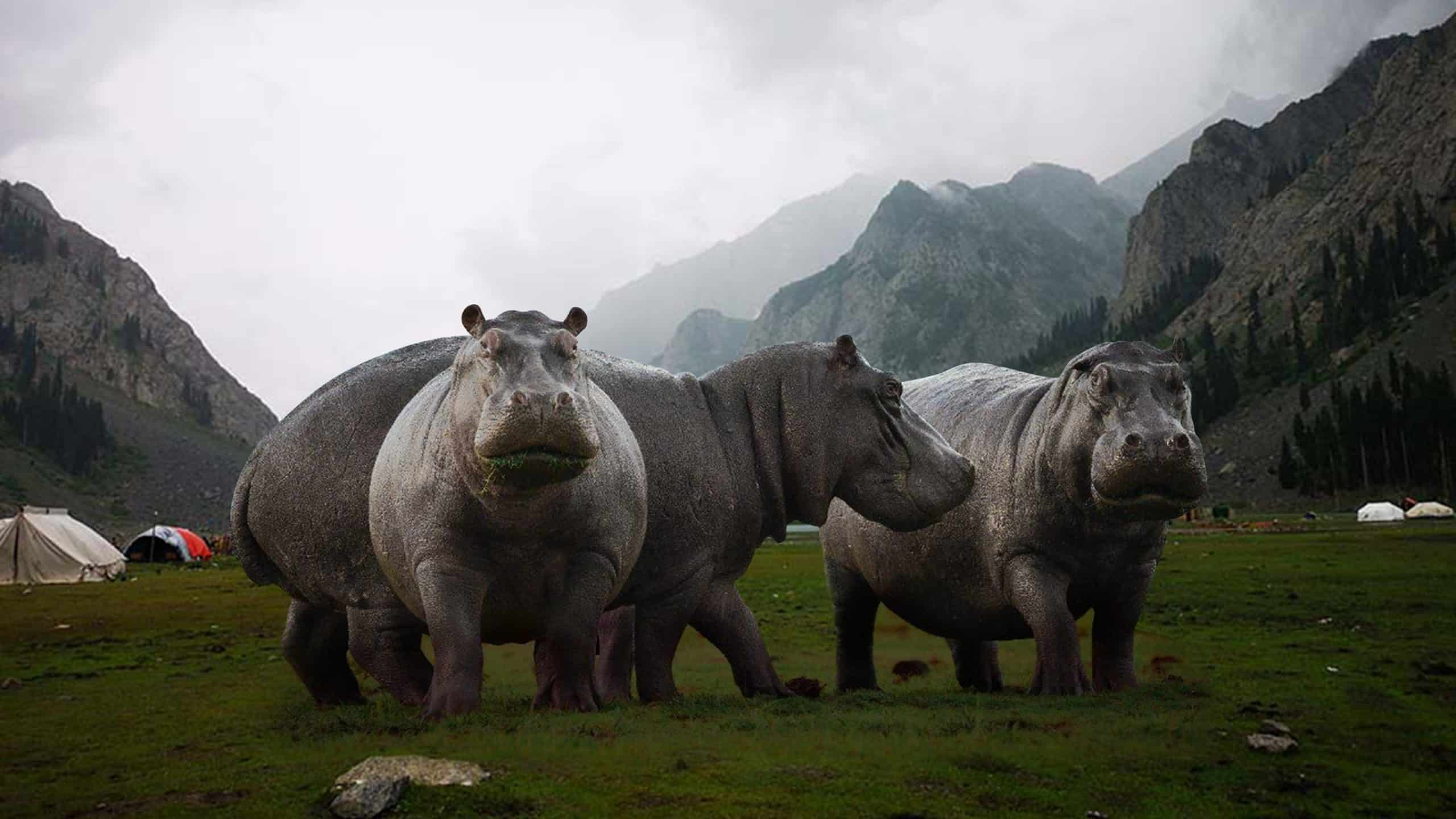 200615 - Hippos - Linkedin